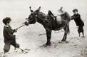 stubborn mule 2